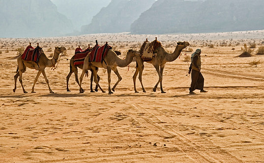Bedouin Man with Camels - ARTLIT™
