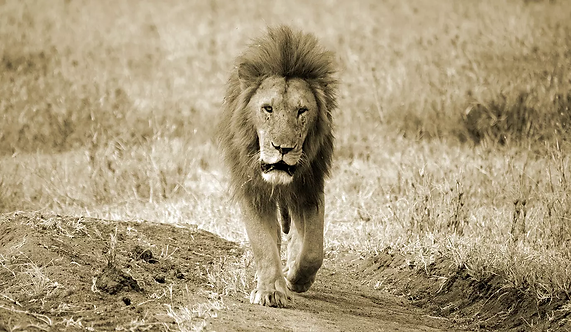 King of the Path - Sepia - ARTLIT™