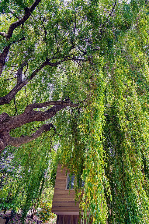 Bayview Treehouse Christchurch New Zealand