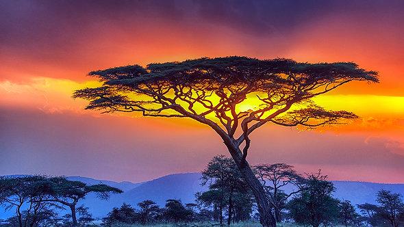 African Fire Sunset - ARTLIT™