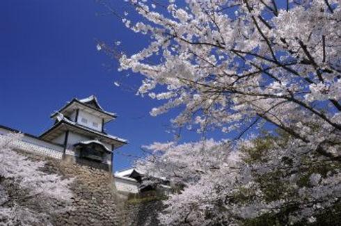 桜.jfif