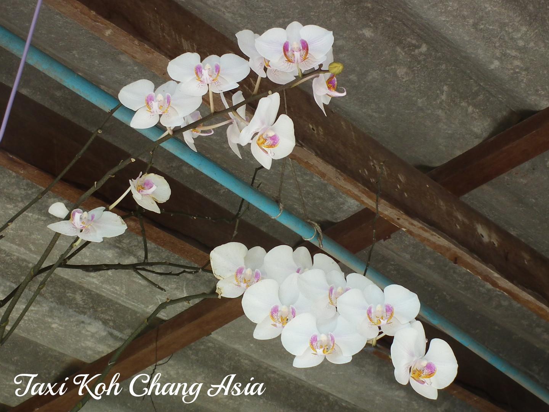 Flowers Koh Chang