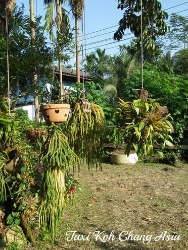 Green Terrace Koh Chang
