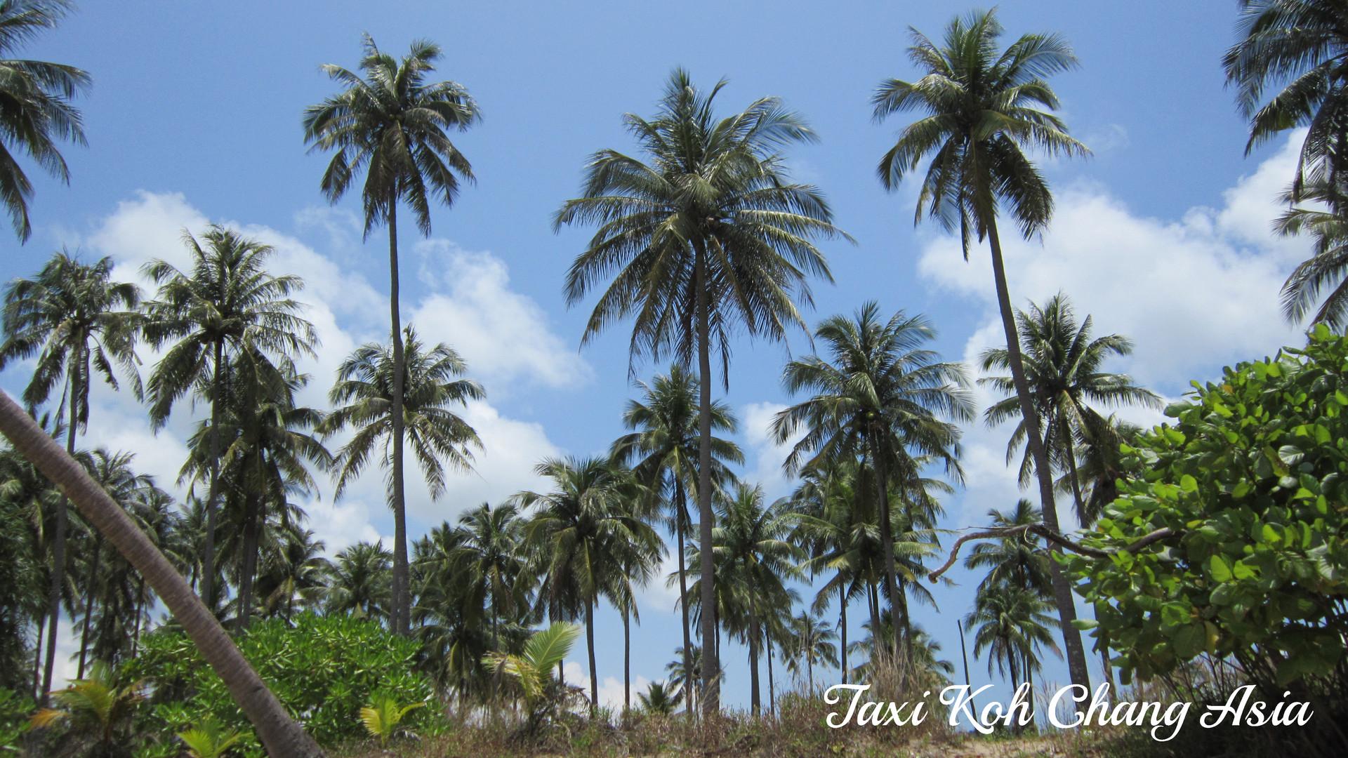 Jungle Around Wai Check Beach