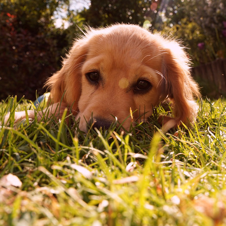 Puppy Checklist - What Do You Need For A Puppy?