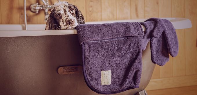 Shop Dog Coats & Bandanas