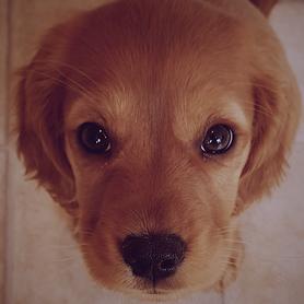 Nellie & Belle Puppy Pack