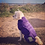 Thumbnail: Ruff and Tumble - Classic Dog Drying Coat
