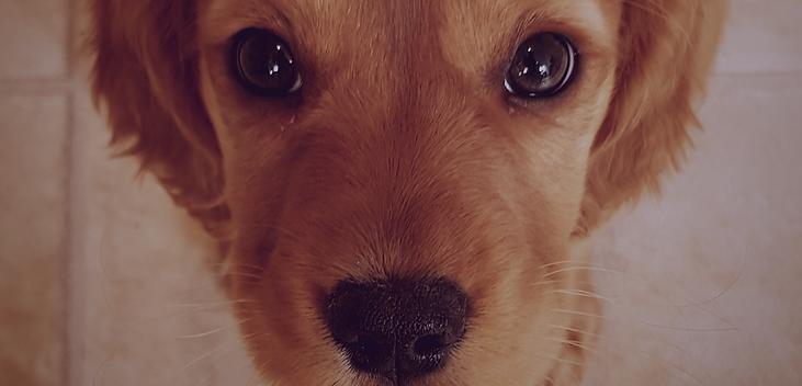Build a puppypack | Nellie & belle