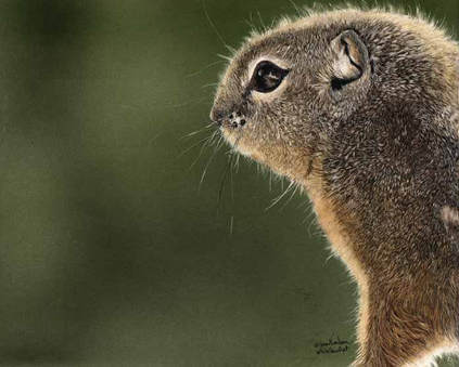"""""""Squirrel!""""  Sold - Prints Still Available"""