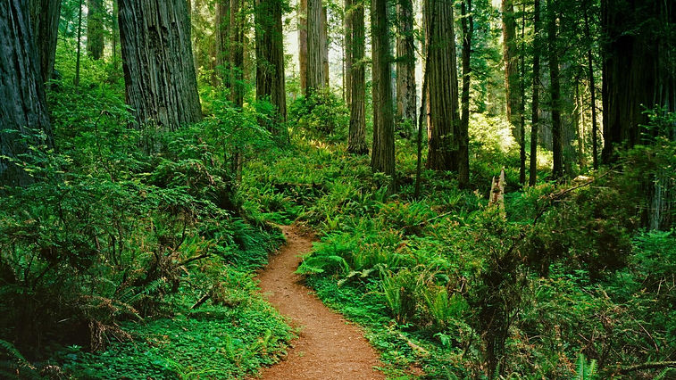 forest-path_00409387.jpg