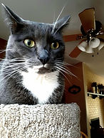 Billy's cat.jpg