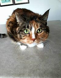 Cat sit.jpg
