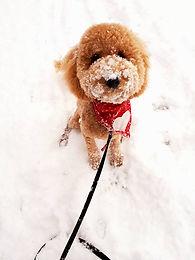Puppy Walter in snow!.jpg