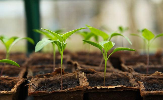 seedling-5009286.jpg