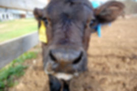 Phloxy with a milk moustache