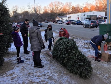 Norfolk Lions Christmas Tree Sale
