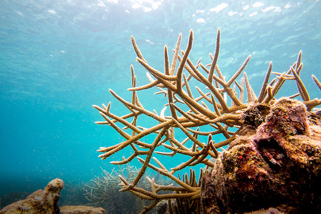 photo of a coral reef