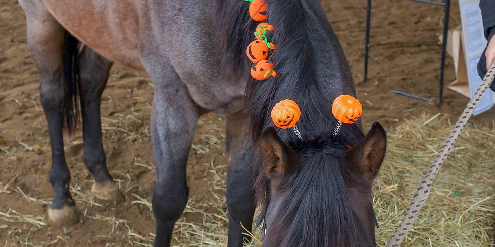 REGISTRATION CLOSED Trot or Treat - Trick or Treat with the Horses!