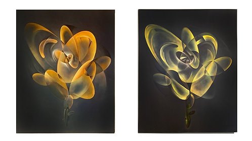 MGRA Rose Ltd. Edition Diptych Giclee Prints (2)