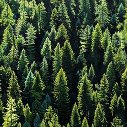 Evergreen Rhythms