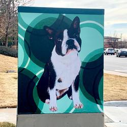Massachusetts Boston Terrier