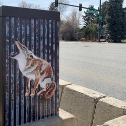 South Dakota Coyote