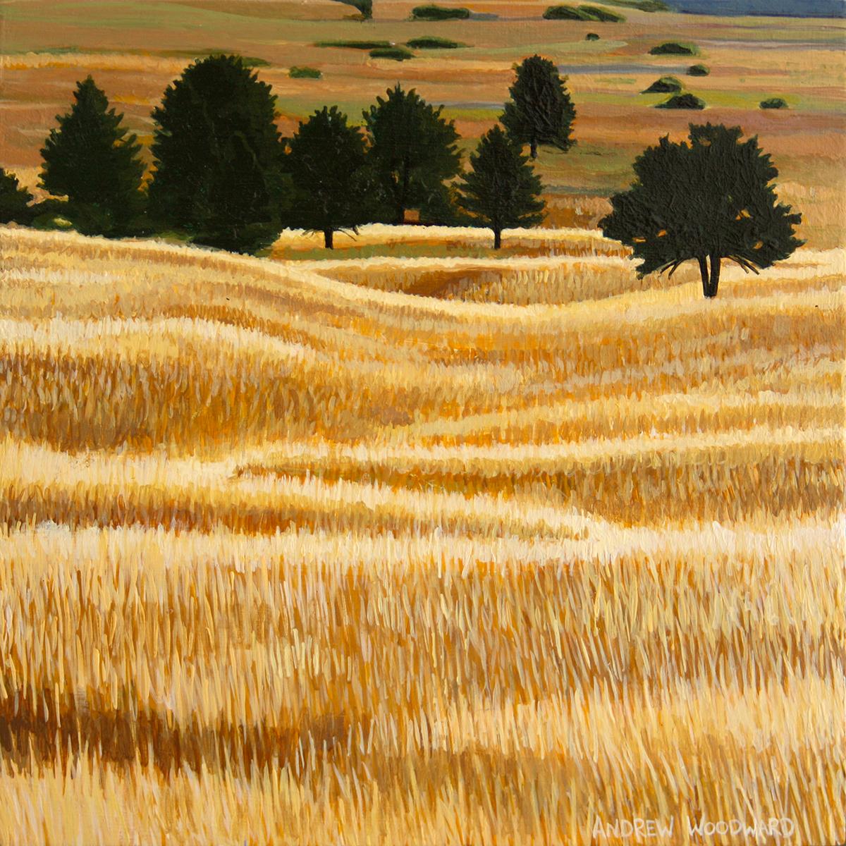 Sunlit Fields