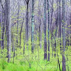 Radnor Woods