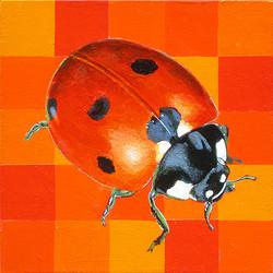 Delaware Ladybug