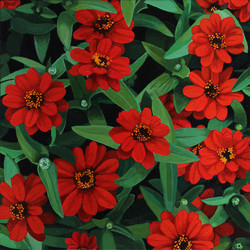 Zinnia Profusion Red