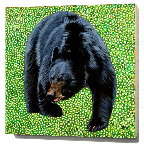West Virginia Black Bear