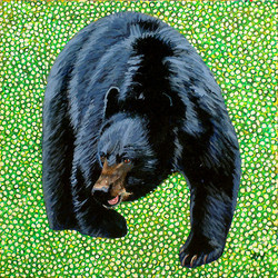West Virginia Black Bear