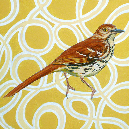 Georgia Brown Thrasher