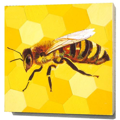 Nebraska Honeybee