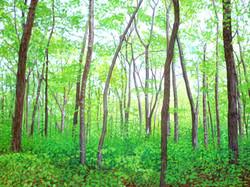 Lush Woods