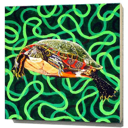 Illinois Painted Turtle