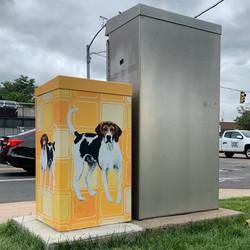 Virginia American Foxhound