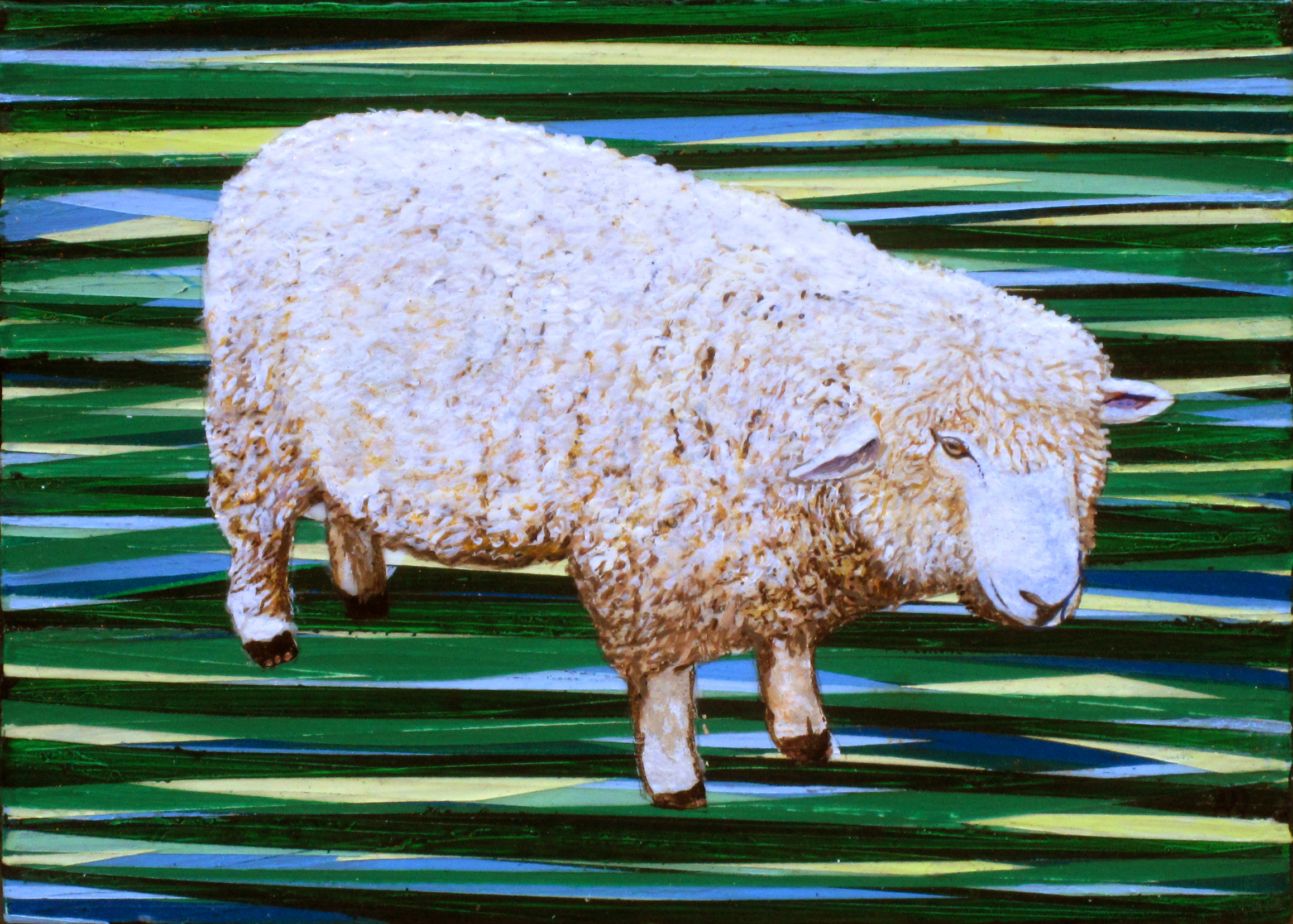 Drumlin Sheep