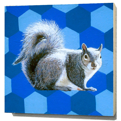 North Carolina Grey Squirrel