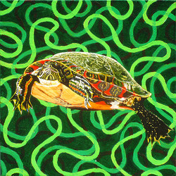Illinois Painted Turtle