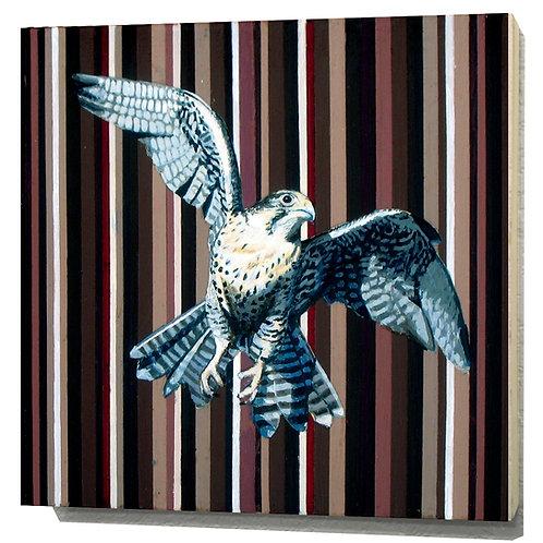 Idaho Peregrine Falcon