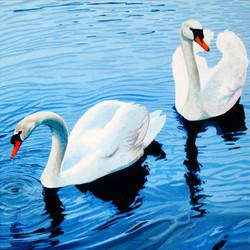 Garden Swans