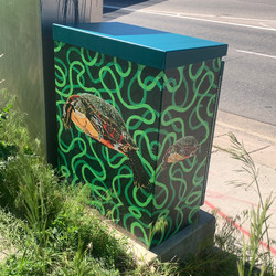 e2021 IL Painted Turtle I25S and Yale
