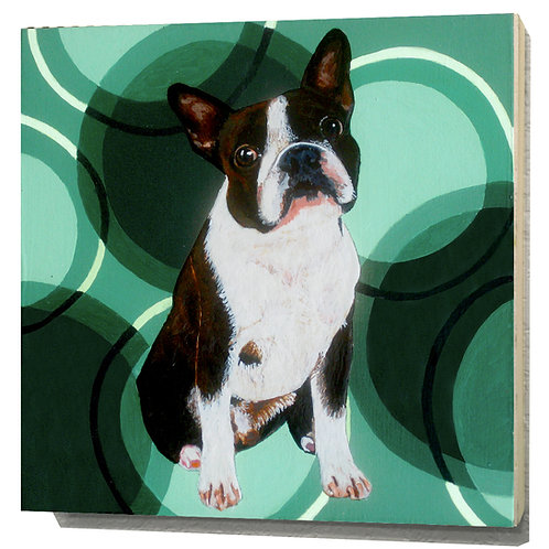 Massachusetts Boston Terrier