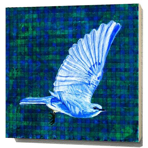 Nevada Mountain Bluebird