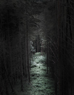 the track through the woods