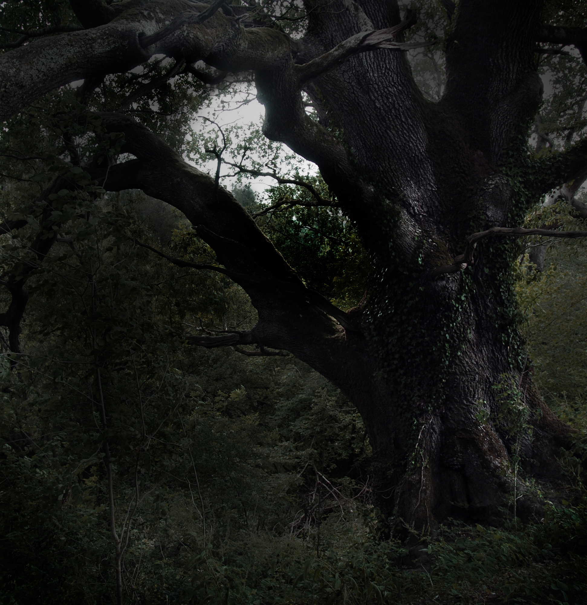 moonrise & oak