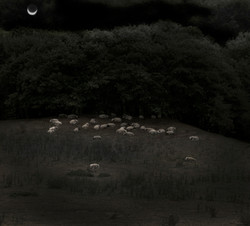 lunar pastoral (after Samuel Palmer)
