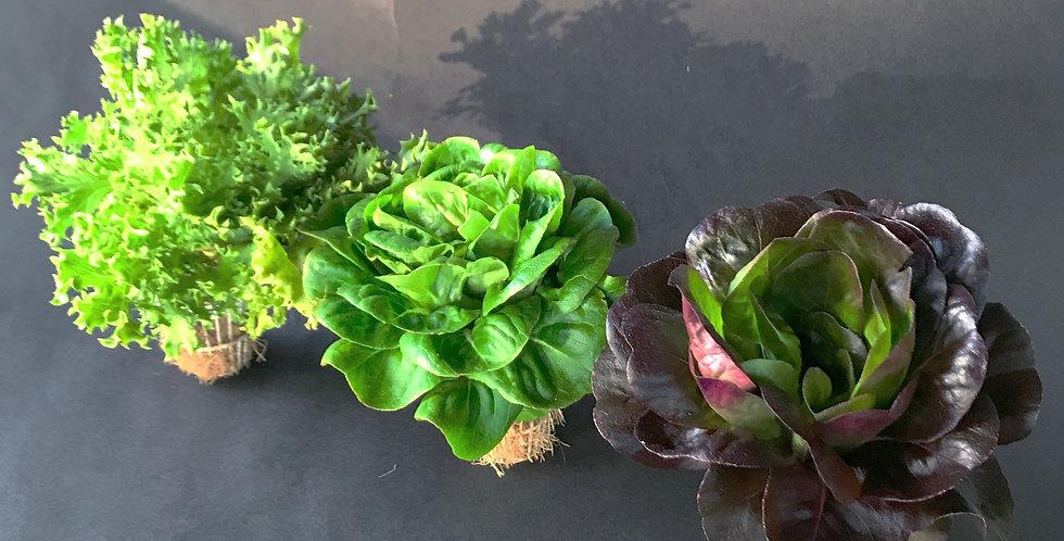 Mixed Lettuce